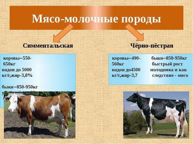Мясо-молочные породы Симментальская Чёрно-пёстрая коровы550- 650кг надои до...