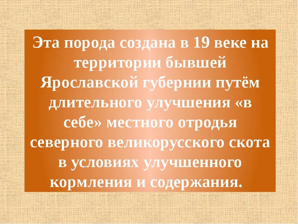 Эта порода создана в 19 веке на территории бывшей Ярославской губернии путём...