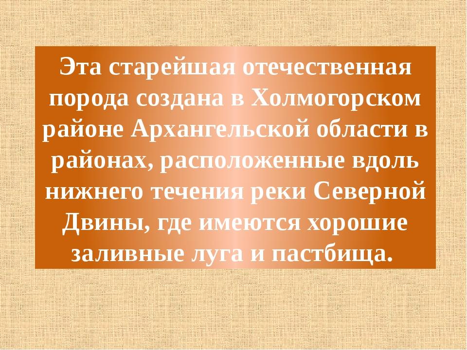Эта старейшая отечественная порода создана в Холмогорском районе Архангельско...