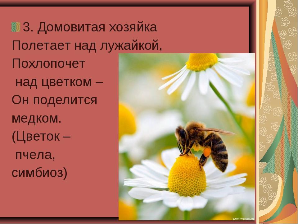 3. Домовитая хозяйка Полетает над лужайкой, Похлопочет над цветком – Он подел...