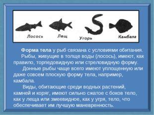 Форма тела у рыб связана с условиями обитания. Рыбы, живущие в толще воды (ло