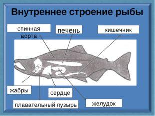 Внутреннее строение рыбы спинная аорта печень кишечник желудок сердце жабры п