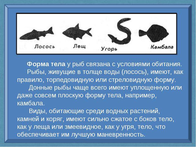 Форма тела у рыб связана с условиями обитания. Рыбы, живущие в толще воды (ло...
