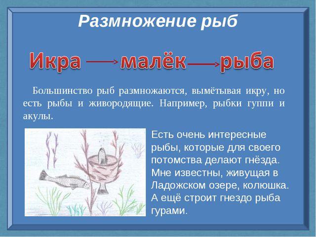 Размножение рыб Большинство рыб размножаются, вымётывая икру, но есть рыбы и...