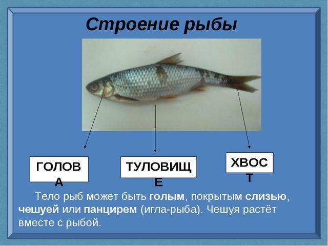 Строение рыбы Тело рыб может быть голым, покрытым слизью, чешуей или панцирем...