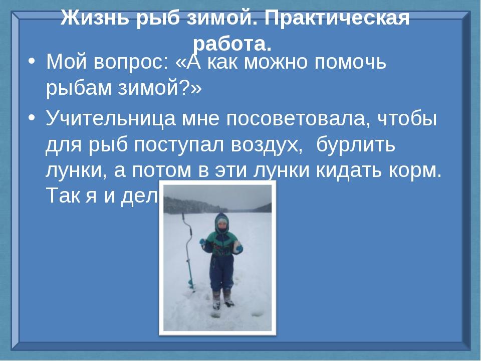 Жизнь рыб зимой. Практическая работа. Мой вопрос: «А как можно помочь рыбам з...