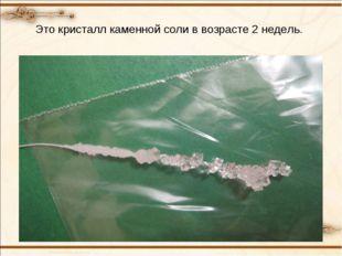 Это кристалл каменной соли в возрасте 2 недель.