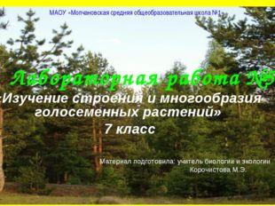 Лабораторная работа №5 «Изучение строения и многообразия голосеменных растени