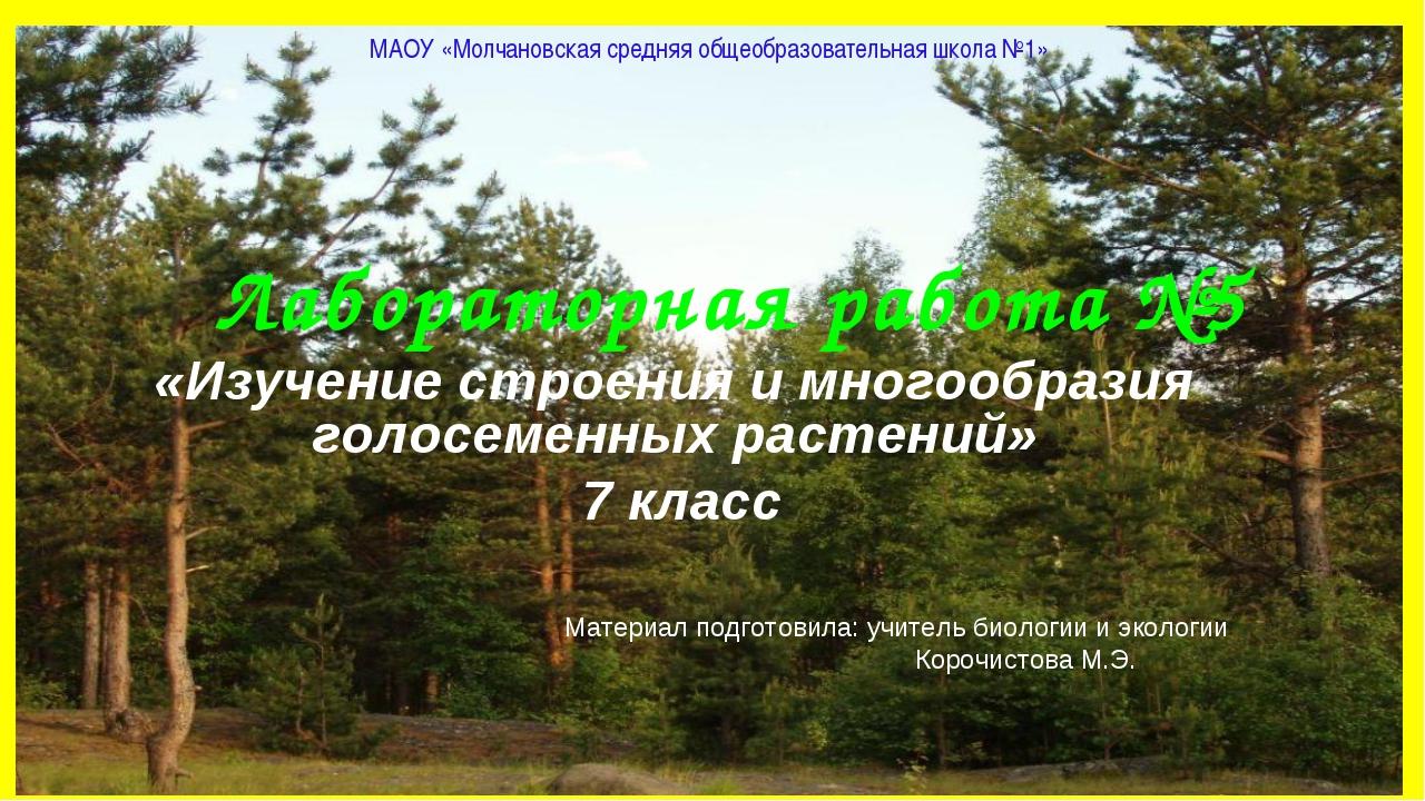 Лабораторная работа №5 «Изучение строения и многообразия голосеменных растени...