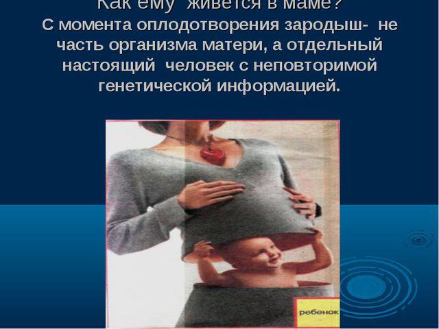Как ему живётся в маме? С момента оплодотворения зародыш- не часть организма...