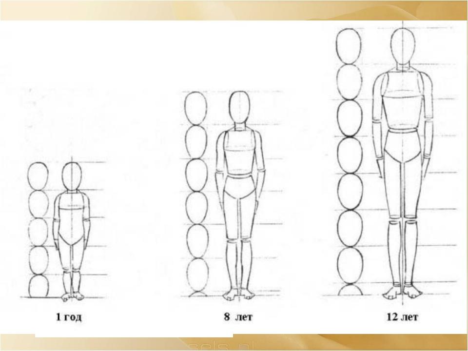 У каждого человека свои характерные пропорции Ребенок четырех-пяти лет – 1/4...