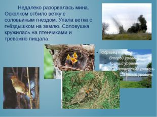 Недалеко разорвалась мина. Осколком отбило ветку с соловьиным гнездом. Упала