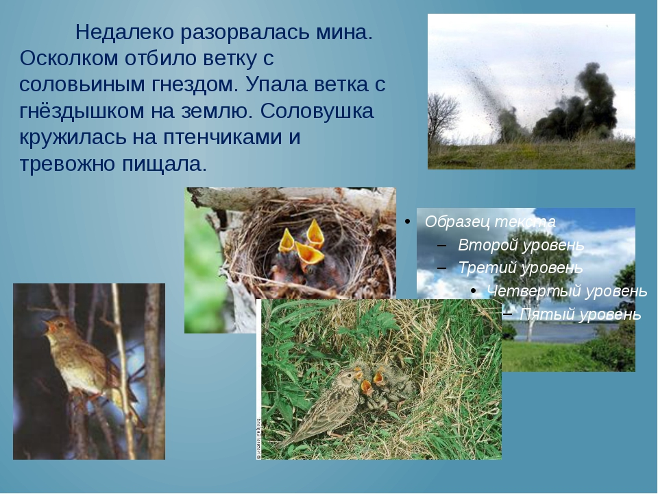 Недалеко разорвалась мина. Осколком отбило ветку с соловьиным гнездом. Упала...