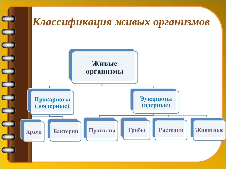 Классификация живых организмов