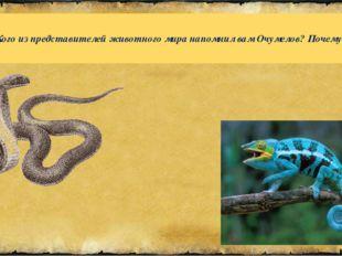 Кого из представителей животного мира напомнил вам Очумелов? Почему?
