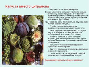 Капуста вместо цитрамона Капуста из всех овощей первая. Вера в целебную силу