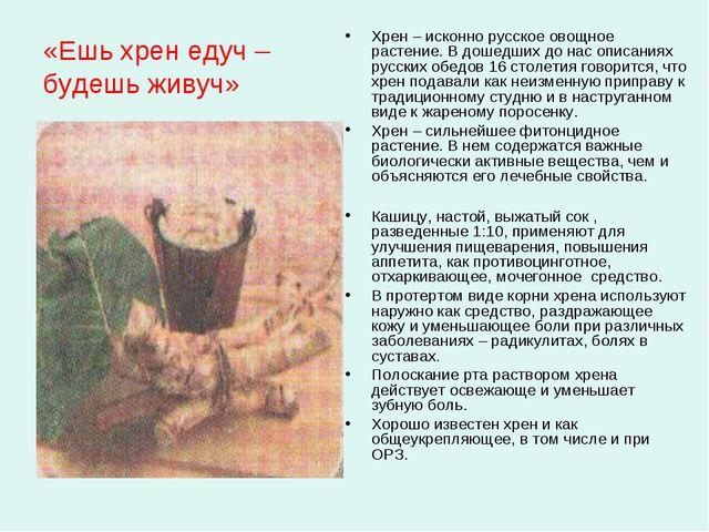 «Ешь хрен едуч – будешь живуч» Хрен – исконно русское овощное растение. В дош...