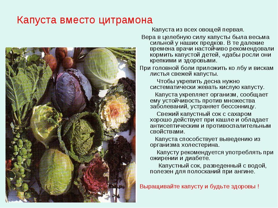 Капуста вместо цитрамона Капуста из всех овощей первая. Вера в целебную силу...