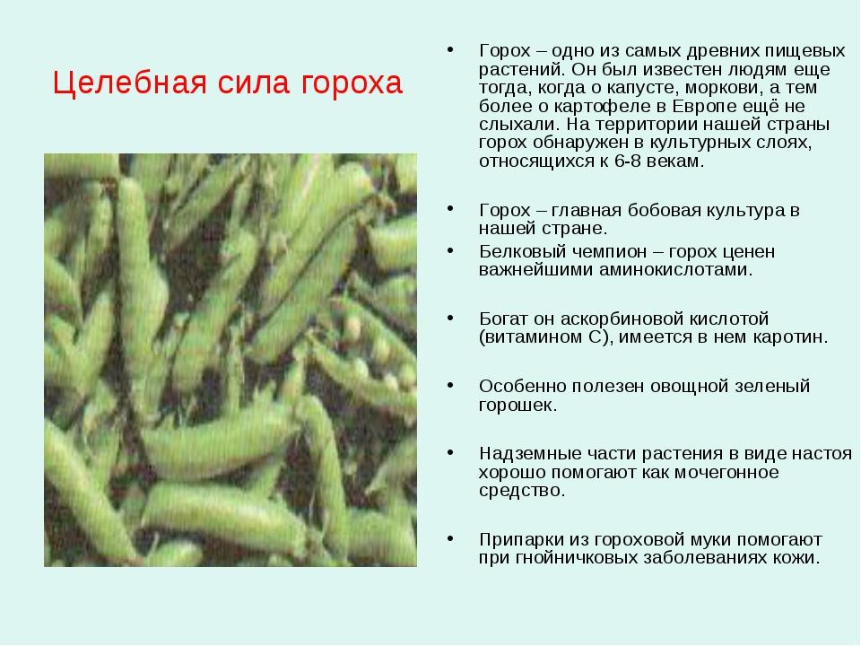 Целебная сила гороха Горох – одно из самых древних пищевых растений. Он был и...