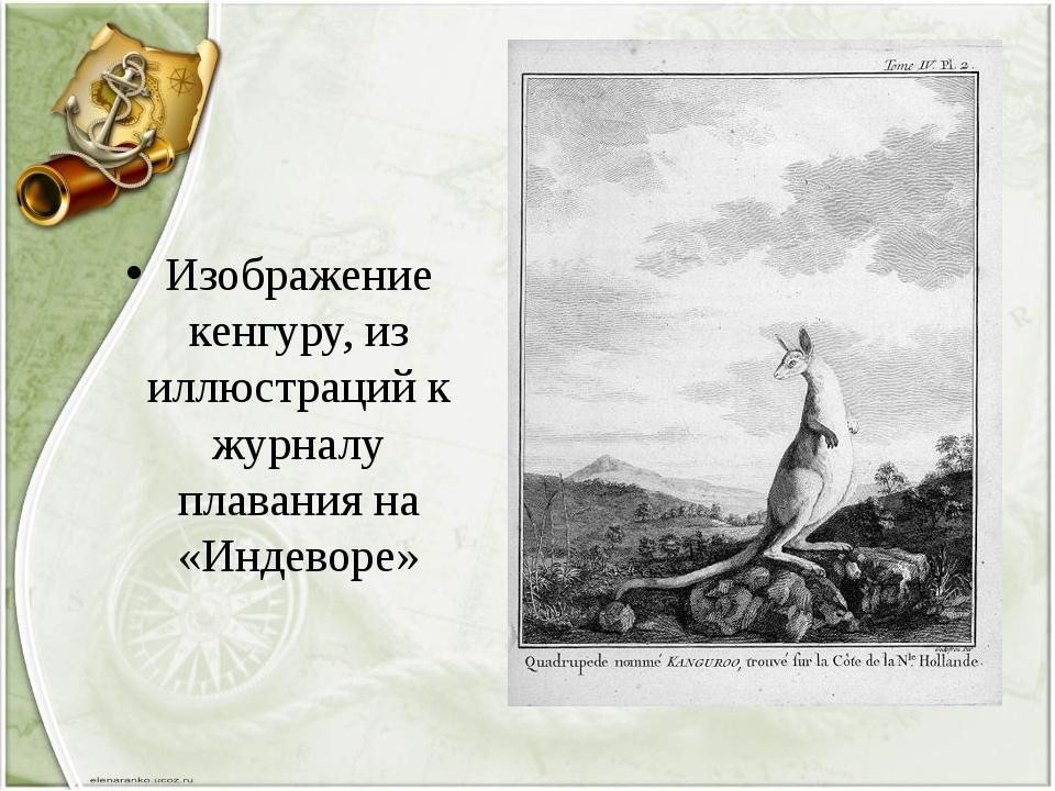 Изображение кенгуру, из иллюстраций к журналу плавания на «Индеворе»
