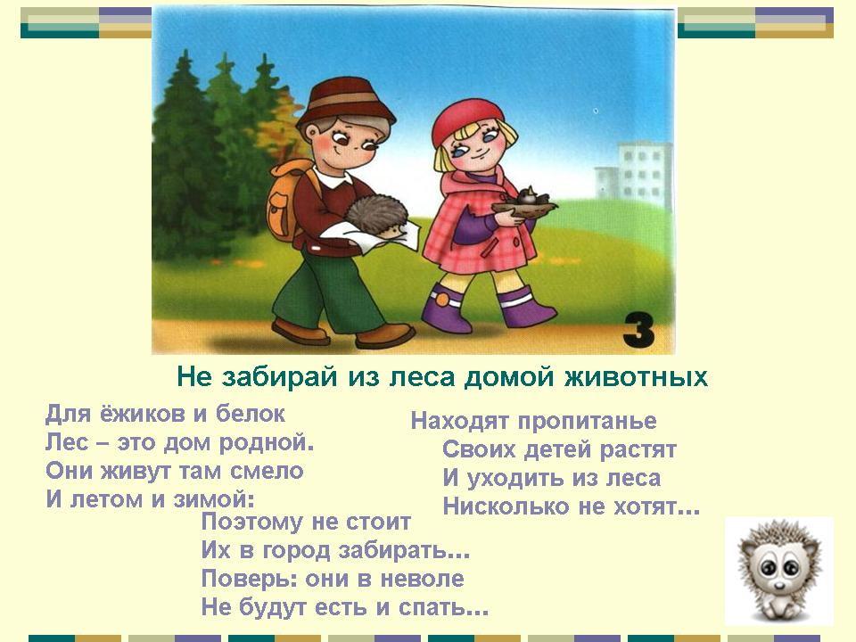 Правила в лесу - Человек - Картинки