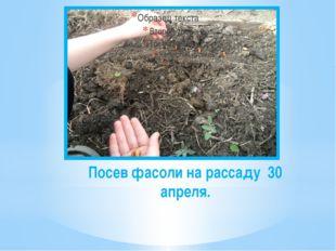 Посев фасоли на рассаду 30 апреля.