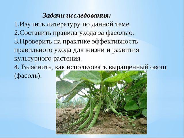 Выращивание фасоли исследовательская работа 82