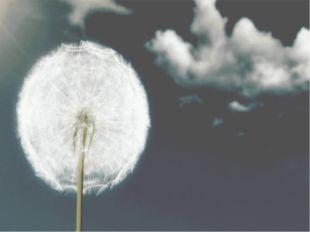 Ветерок пушинки разнесёт окрест, Парашютик белый вскружит до небес. Солнышки-