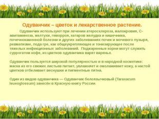 Одуванчик – цветок и лекарственное растение. Одуванчик используют при лечени