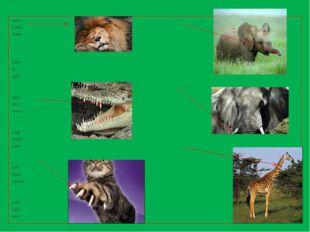 mane [ meın] грива teeth [ti:θ] зубы сlaw [klɔ: ] коготь trunk [trлŋk] хобот