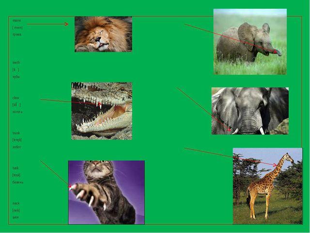mane [ meın] грива teeth [ti:θ] зубы сlaw [klɔ: ] коготь trunk [trлŋk] хобот...