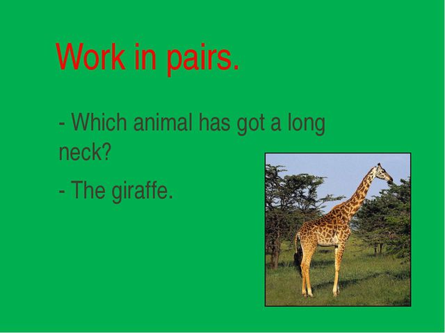 Work in pairs. - Which animal has got a long neck? - The giraffe.