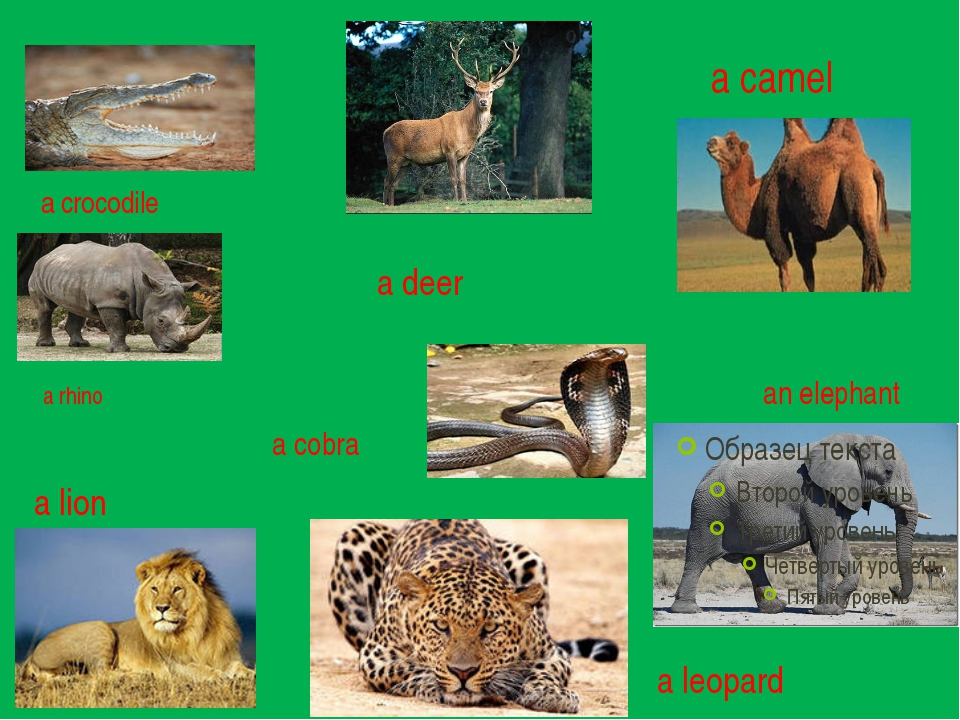 a crocodile a deer a camel an elephant a lion a leopard a cobra a rhino