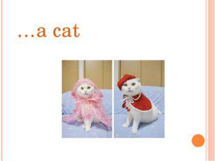 …a cat