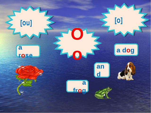 [ou] Oo [o] a rose a dog and a frog