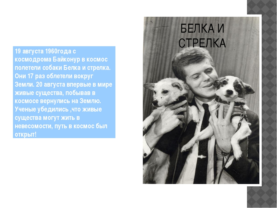 БЕЛКА И СТРЕЛКА 19 августа 1960года с космодрома Байконур в космос полетели с...