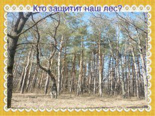 Кто защитит наш лес?