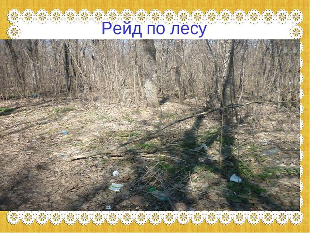 Рейд по лесу