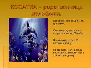 КОСАТКА – родственница дельфина. Косатки живут семейными группами. Они могут