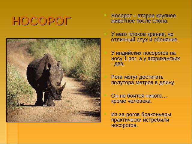 НОСОРОГ Носорог – второе крупное животное после слона. У него плохое зрение,...