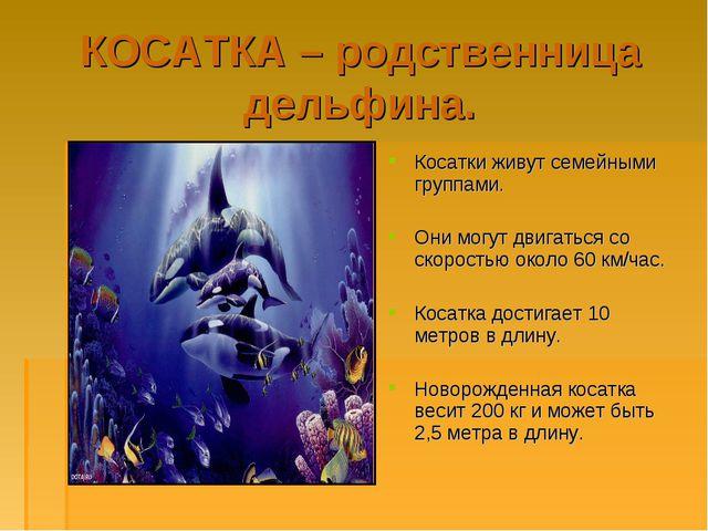 КОСАТКА – родственница дельфина. Косатки живут семейными группами. Они могут...