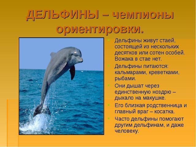 ДЕЛЬФИНЫ – чемпионы ориентировки. Дельфины живут стаей, состоящей из нескольк...