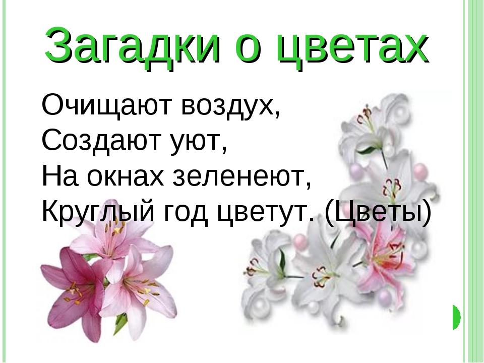 Загадки о цветах Очищают воздух, Создают уют, На окнах зеленеют, Круглый год...