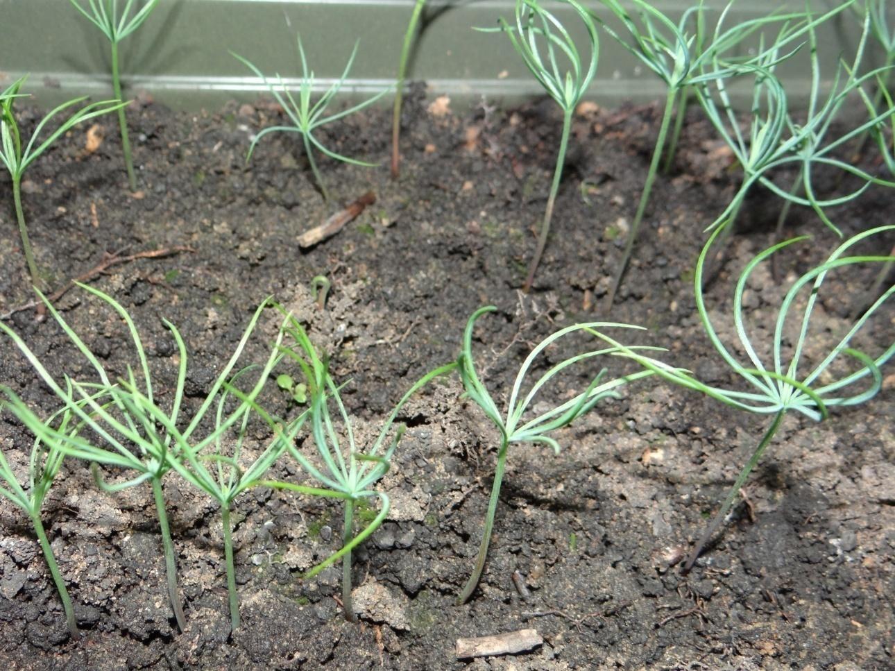 Выращивание 6