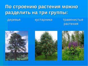 По строению растения можно разделить на три группы: деревья кустарники травян