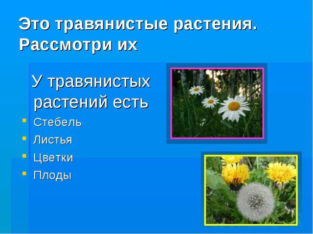 Это травянистые растения. Рассмотри их У травянистых растений есть Стебель Ли...