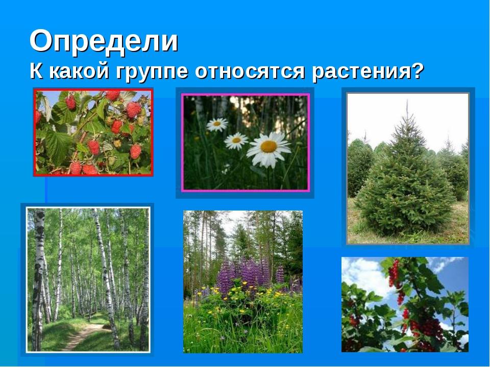 Определи К какой группе относятся растения?