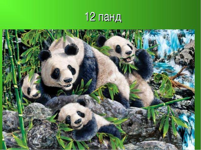 12 панд