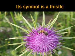 Its symbol is a thistle