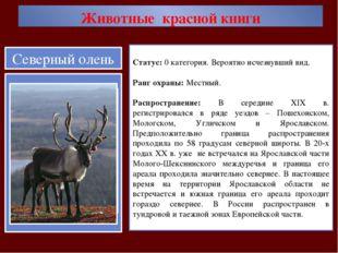 Животные красной книги Статус: 0 категория. Вероятно исчезнувший вид. Ранг ох